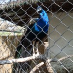 2011.04.16_Zoo Vrt (132)