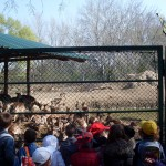 2011.04.16_Zoo Vrt (048)