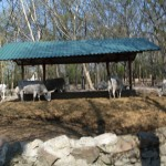 2011.04.16_Zoo Vrt (049)
